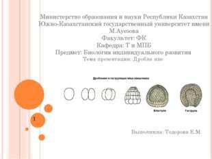 Министерство образования и науки Республики Казахстан Южно-Казахстанский госу