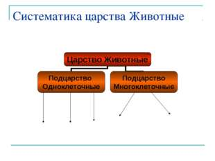 Систематика царства Животные
