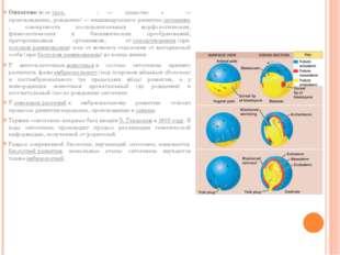 Онтогене́з(отгреч.οντογένεση:ον— существо +γένεση— происхождение, рожд