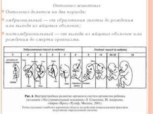 Онтогенез животных Онтогенез делится на два периода: эмбриональный— от образ