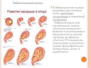 Эмбриональный период В эмбриональном периоде выделяют три основных этапа:дро