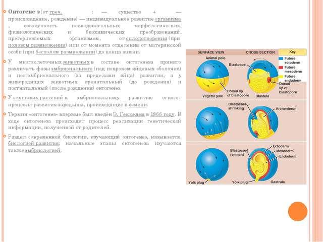 Онтогене́з(отгреч.οντογένεση:ον— существо +γένεση— происхождение, рожд...