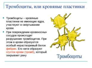 Тромбоциты, или кровяные пластинки Тромбоциты – кровяные пластинки не имеющие