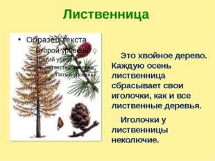Лиственница Это хвойное дерево. Каждую осень лиственница сбрасывает свои игол