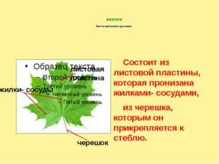 БИОЛОГИ Листок цветкового растения Состоит из листовой пластины, которая про