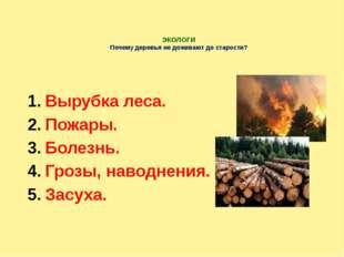 ЭКОЛОГИ Почему деревья не доживают до старости? Вырубка леса. Пожары. Болезн