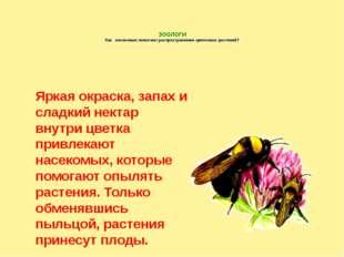 ЗООЛОГИ Как насекомые помогают распространению цветковых растений? Яркая окр