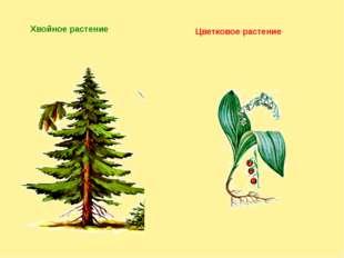 Хвойное растение Цветковое растение