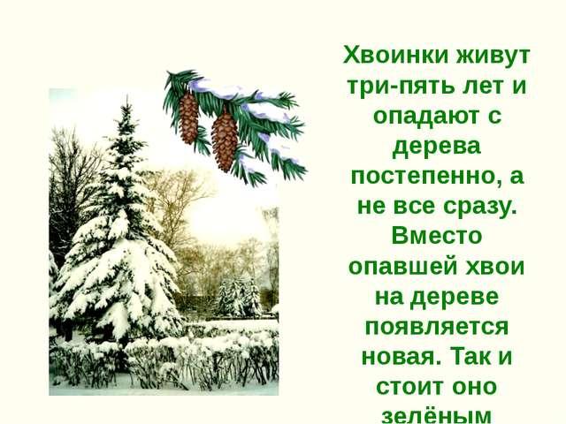 Хвоинки живут три-пять лет и опадают с дерева постепенно, а не все сразу. Вме...