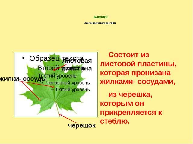 БИОЛОГИ Листок цветкового растения Состоит из листовой пластины, которая про...