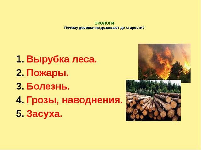 ЭКОЛОГИ Почему деревья не доживают до старости? Вырубка леса. Пожары. Болезн...