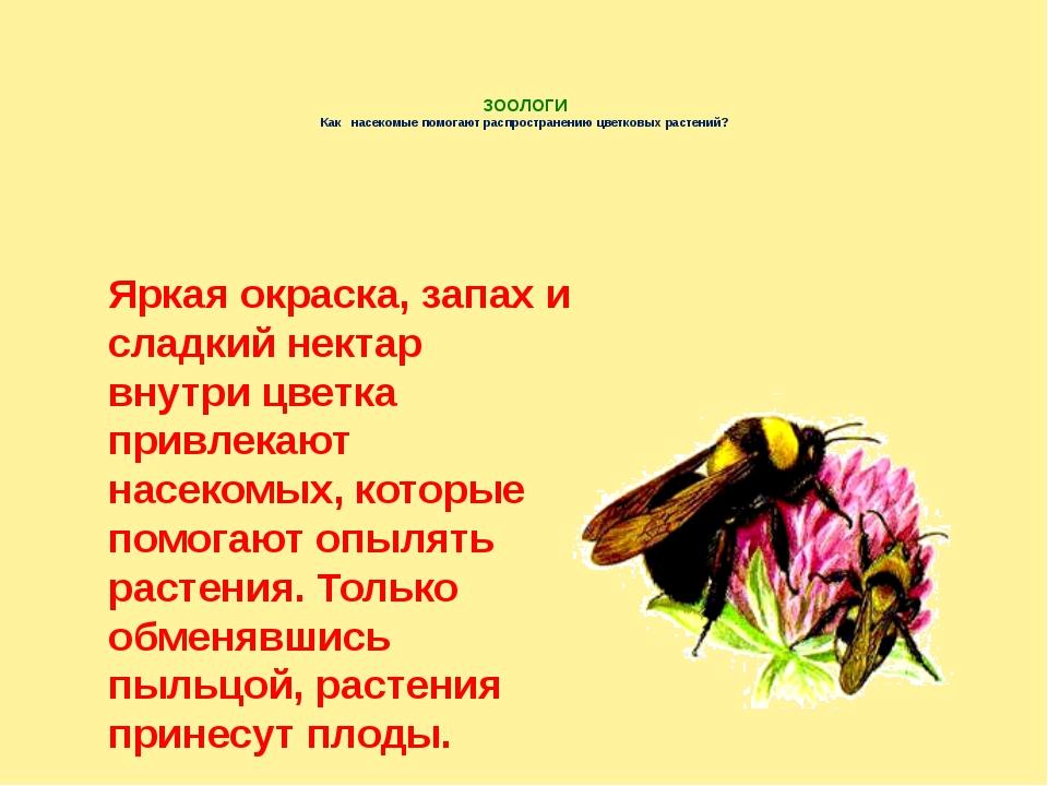 ЗООЛОГИ Как насекомые помогают распространению цветковых растений? Яркая окр...