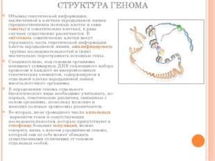 СТРУКТУРА ГЕНОМА Объёмы генетической информации, заключённой в клетках зароды