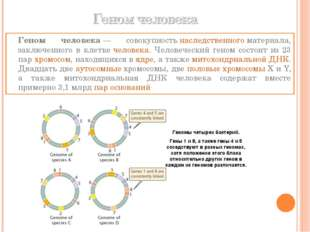 Геном человека— совокупностьнаследственногоматериала, заключенного в клет