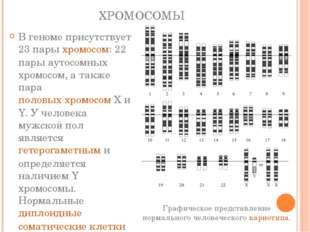 ХРОМОСОМЫ В геноме присутствует 23 парыхромосом: 22 пары аутосомных хромосом