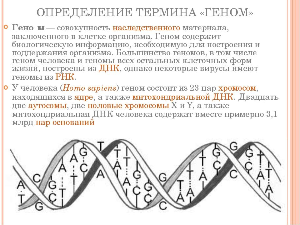 ОПРЕДЕЛЕНИЕ ТЕРМИНА «ГЕНОМ» Гено́м— совокупностьнаследственногоматериала,...