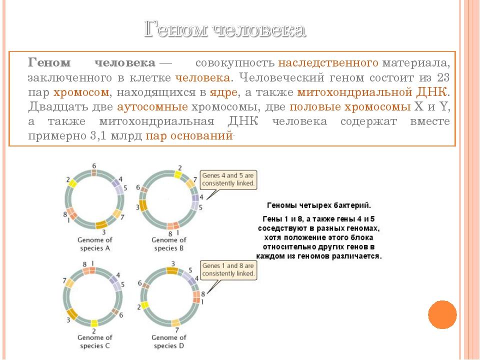 Геном человека— совокупностьнаследственногоматериала, заключенного в клет...