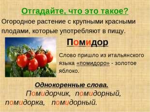 Отгадайте, что это такое? Огородное растение с крупными красными плодами, кот