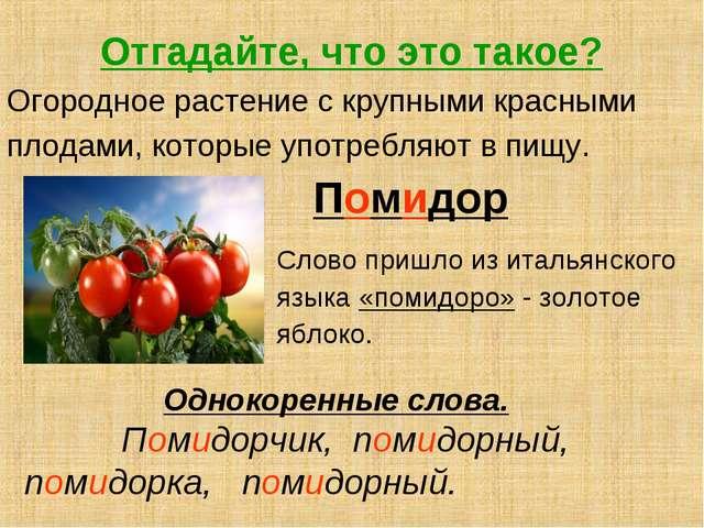 Отгадайте, что это такое? Огородное растение с крупными красными плодами, кот...