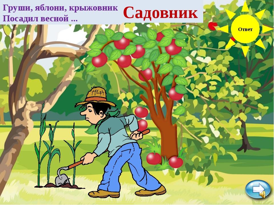Ответ Груши, яблони, крыжовник Посадил весной ... Садовник
