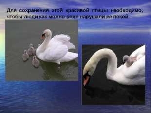 Для сохранения этой красивой птицы необходимо, чтобы люди как можно реже нару