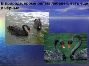 В природе, кроме белых лебедей, есть ещё и чёрные