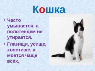 Кошка Часто умывается, а полотенцем не утирается. Глазищи, усище, хвостище,