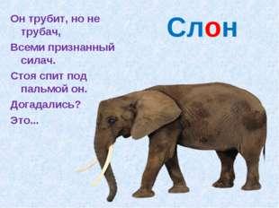 Слон Он трубит, но не трубач, Всеми признанный силач. Стоя спит под пальмой о