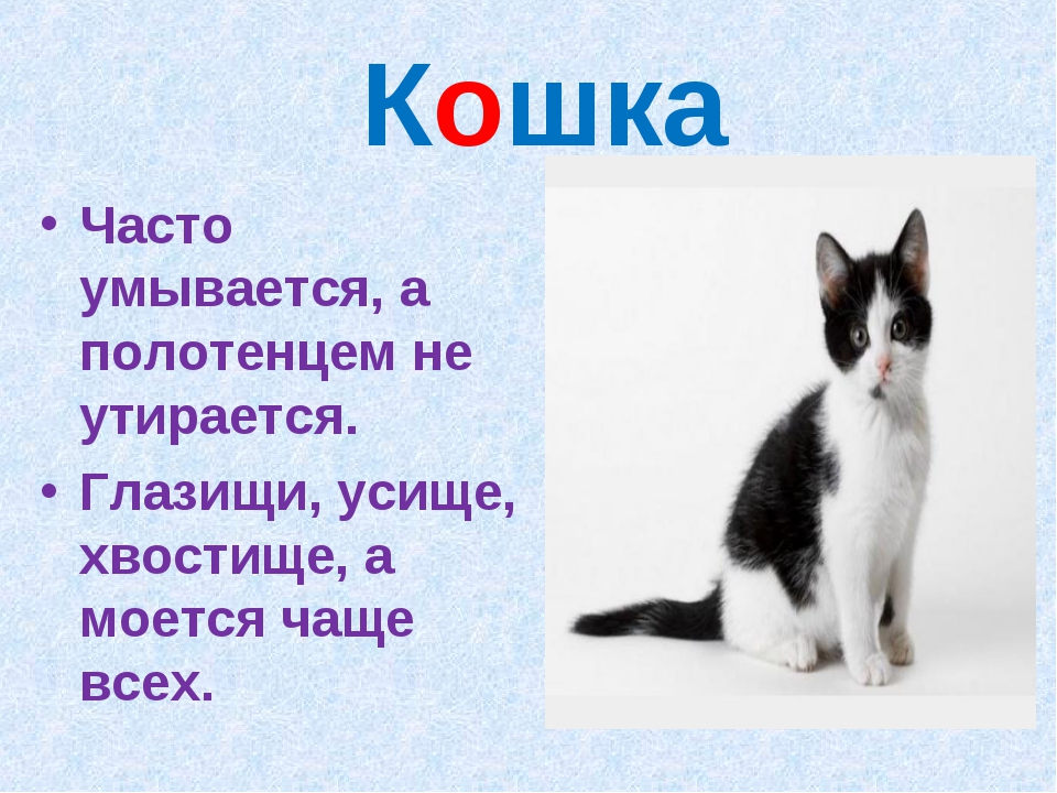 Кошка Часто умывается, а полотенцем не утирается. Глазищи, усище, хвостище,...