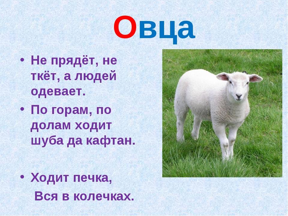 Овца Не прядёт, не ткёт, а людей одевает. По горам, по долам ходит шуба да к...