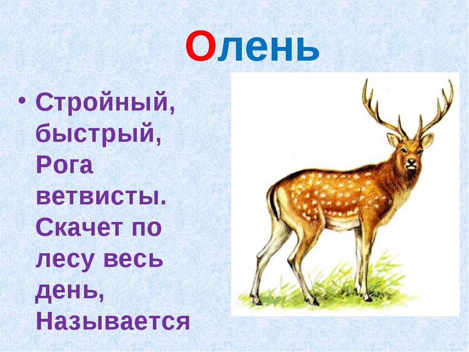 Олень Стройный, быстрый, Рога ветвисты. Скачет по лесу весь день, Называется ….