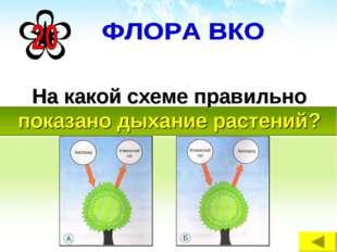 На какой схеме правильно показано дыхание растений?