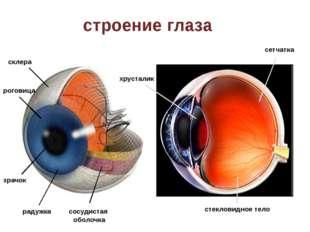 строение глаза склера роговица зрачок радужка сосудистая оболочка хрусталик с