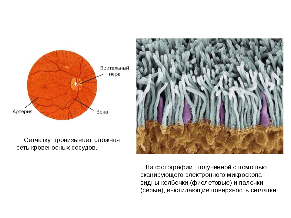 На фотографии, полученной с помощью сканирующего электронного микроскопа вид...