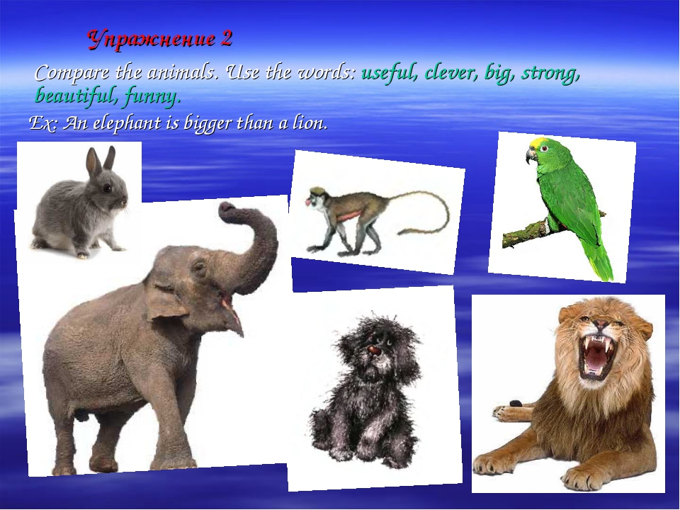 Упражнение 2 	Compare the animals. Use the words: useful, clever, big, strong...