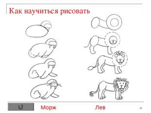 * Как научиться рисовать Морж Лев