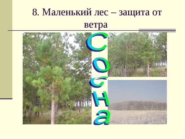 8. Маленький лес – защита от ветра