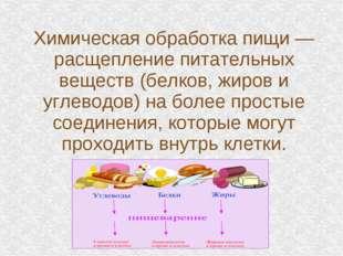 Химическая обработка пищи — расщепление питательных веществ (белков, жиров и