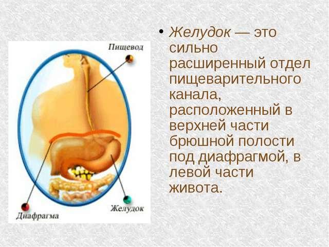 Желудок — это сильно расширенный отдел пищеварительного канала, расположенный...