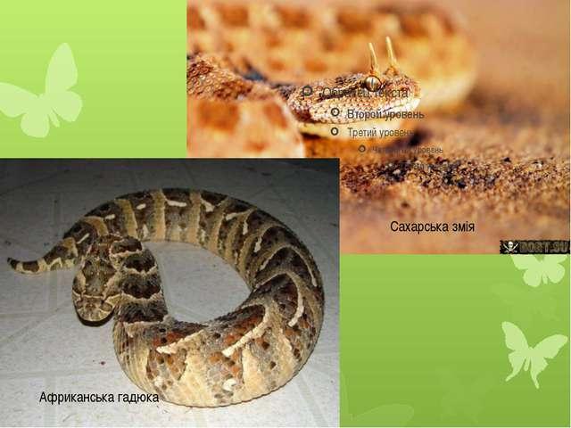 Африканська гадюка Сахарська змія