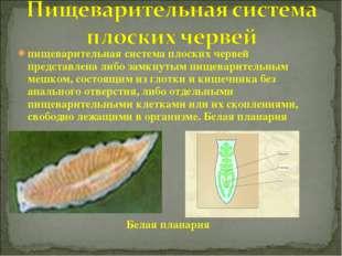 пищеварительная система плоских червей представлена либо замкнутым пищеварите