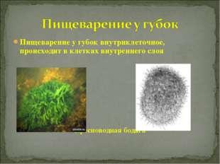 Пищеварение у губок внутриклеточное, происходит в клетках внутреннего слоя Пр