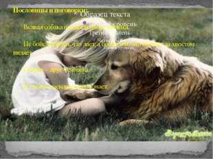 Пословицы и поговорки: Всякая собака на своем дворе хозяйка. Не бойся собак