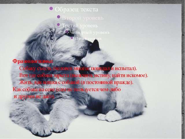 Фразеологизмы: Собаку съесть (человек многое повидал и испытал). Вот где со...