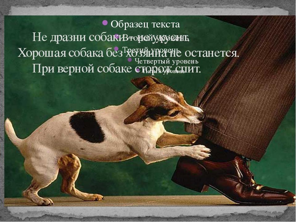 Не дразни собаки – не укусит. Хорошая собака без хозяина не останется. При...