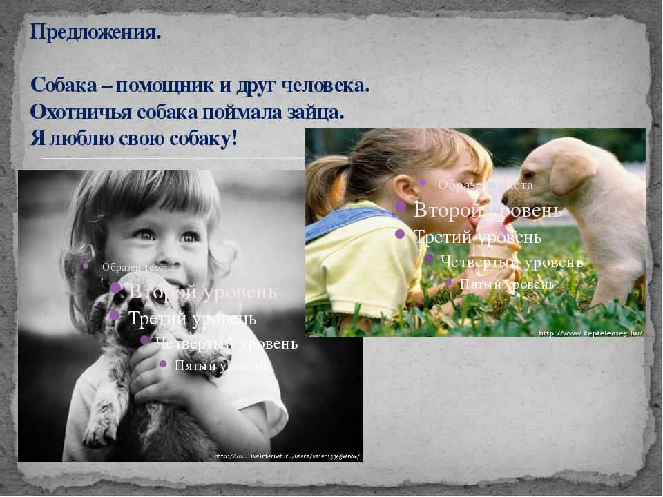 Предложения. Собака – помощник и друг человека. Охотничья собака поймала зай...