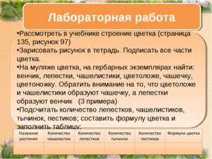 Ход работы: Рассмотреть в учебнике строение цветка (страница 135, рисунок 97
