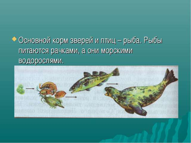 Основной корм зверей и птиц – рыба. Рыбы питаются рачками, а они морскими вод...