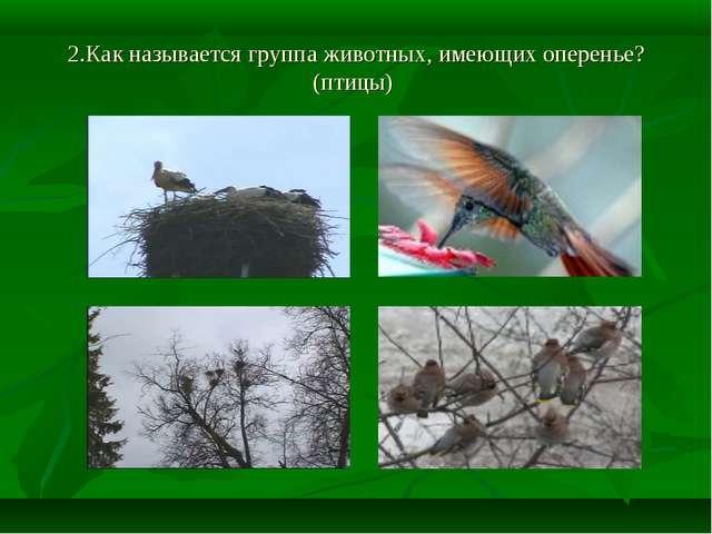 2.Как называется группа животных, имеющих оперенье? (птицы)