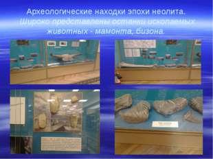 Археологические находки эпохи неолита. Широко представлены останки ископаемых